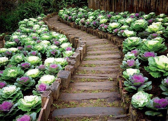 Дизайн огорода своими руками фото цветов
