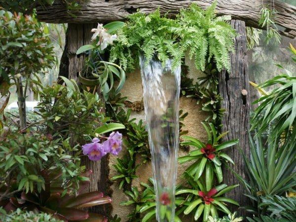 Тропические растения требуют высокой влажности воздуха