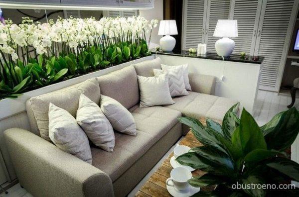 Диван полностью спрятался за основой для орхидей