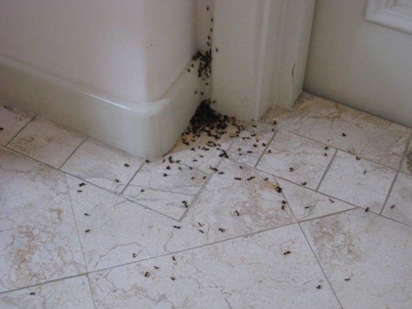 Членистоногие в ванной комнате – это малопривлекательное зрелище