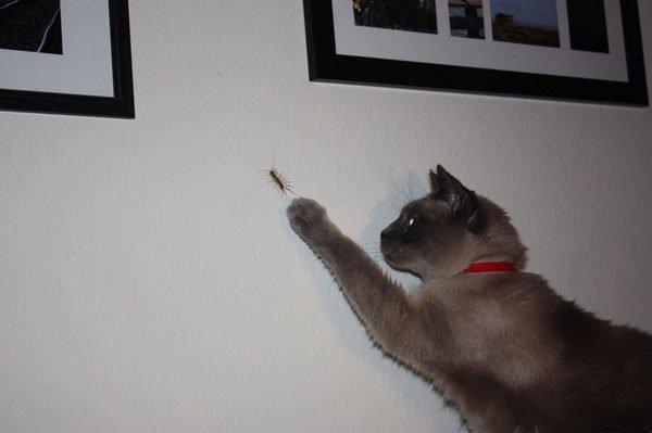 На фото мухоловка насекомое и кошка-мухоловка