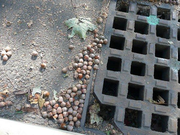 Переносимый стоками мусор заставляет увеличивать диаметр ливневой канализации.