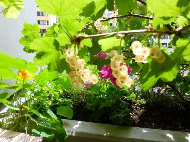Что вырастить на балконе: какие цветы, пряные травы можно ра.