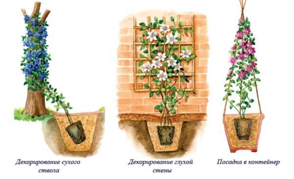 Без должной опоры (пример на фото) клематису будет некуда расти
