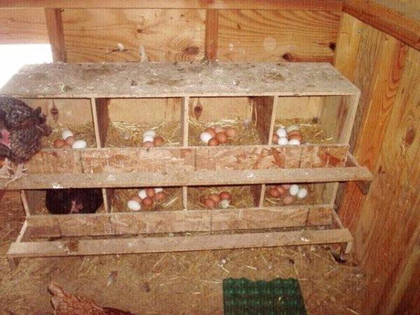 Чтобы курам было комфортно, и они давали много яиц, их домик нужно утеплять.