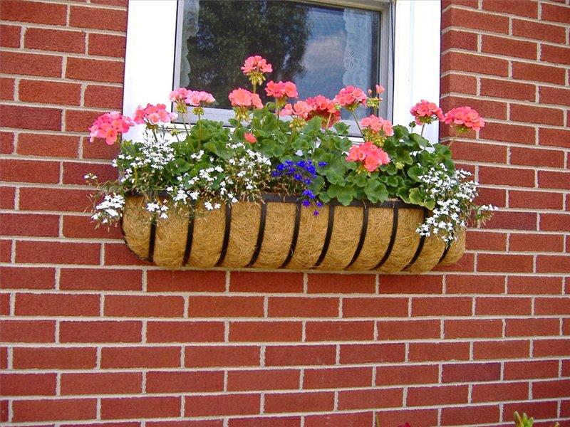 Цветы в ящиках под окном