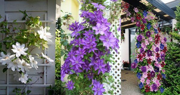 Красивые цветы будут радовать вас долгие месяцы