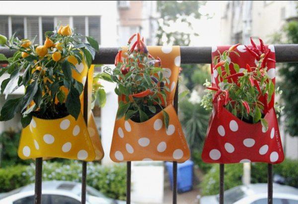 Можно ли вырастить урожай перца на балконе? Можно, если обеспечить ему комфортные условия.