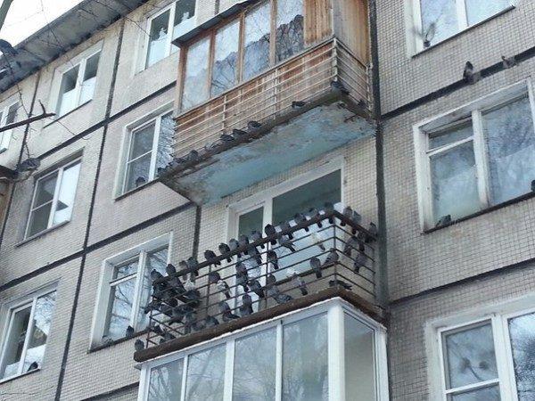 На фото: голуби могут стать настоящей проблемой, если вовремя не подобрать средство борьбы с ними