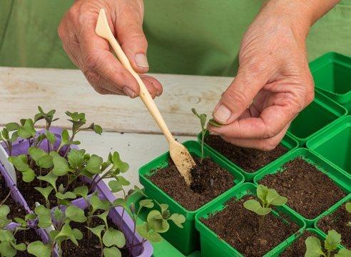 Начинать удобрять капусту нужно еще с момента ухода за рассадой, чтобы получить в результате богатый урожай