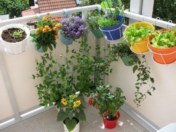 Цветы на кухне вьющиеся