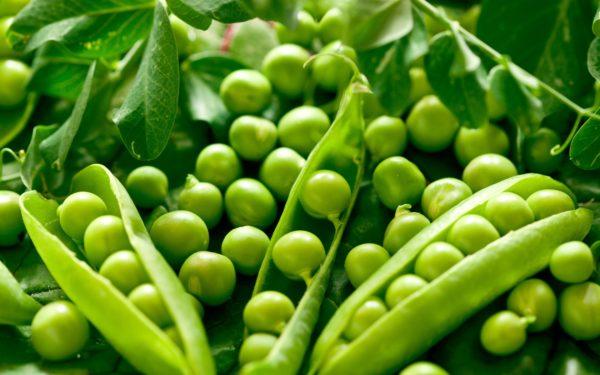 Ничего не может быть вкуснее, чем собственноручно выращенные растения!