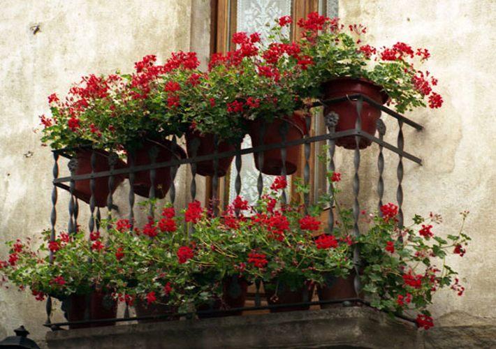 Разнообразные цветы на балконе - отличное украшение для ваши.