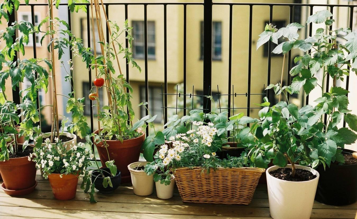 Огород на балконе или лоджии: с чего начать, что можно посад.