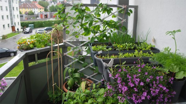 Отдельные горшочки, умеренное освещение и полив – все, что потребуется для комфортной разбивки огорода