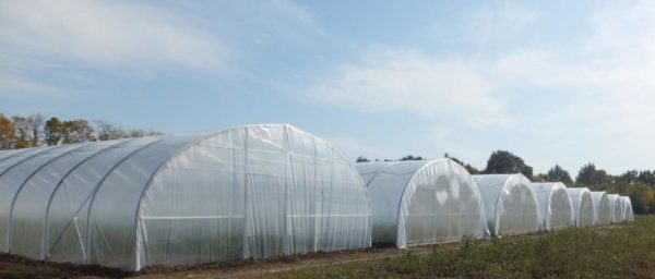 Ранней весной даже поликарбонатные конструкции можно накрыть полиэтиленом, как на этом фото