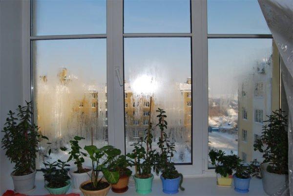 Растения могут стать причиной запотевания окон