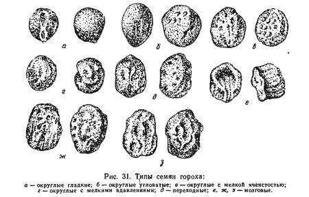 Разновидности гороховых бобов.