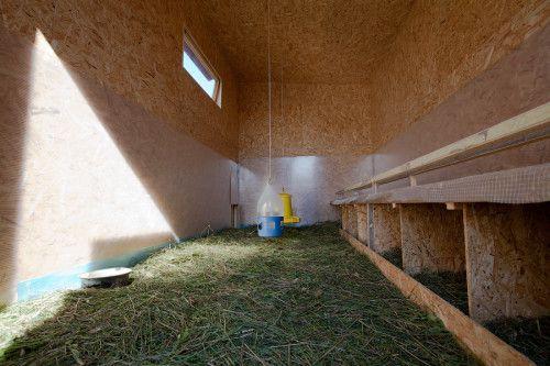Сено в курятнике (на фото) тоже защитит помещение от промерзания зимой и обеспечит нужный микроклимат для птицы.