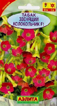Цветки-колокольчики необычной формы густо покрывают все растение