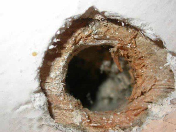 Утеплить дом, в котором живут мыши – задача нетривиальная!
