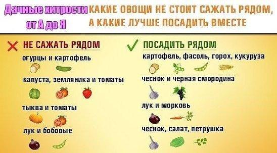 Какие овощи сажать