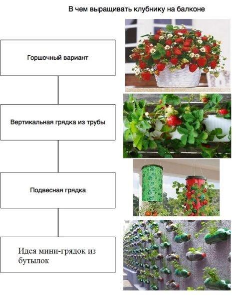 Варианты выращивания клубники