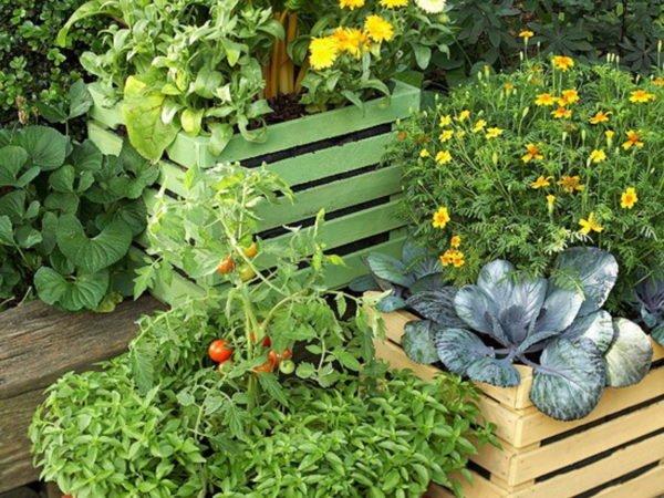 Задаетесь вопросом, что из овощей посадить на балконе? Огурцы, томаты, перец, фасоль, салат и ароматные травы – это неполный перечень балконных овощей.