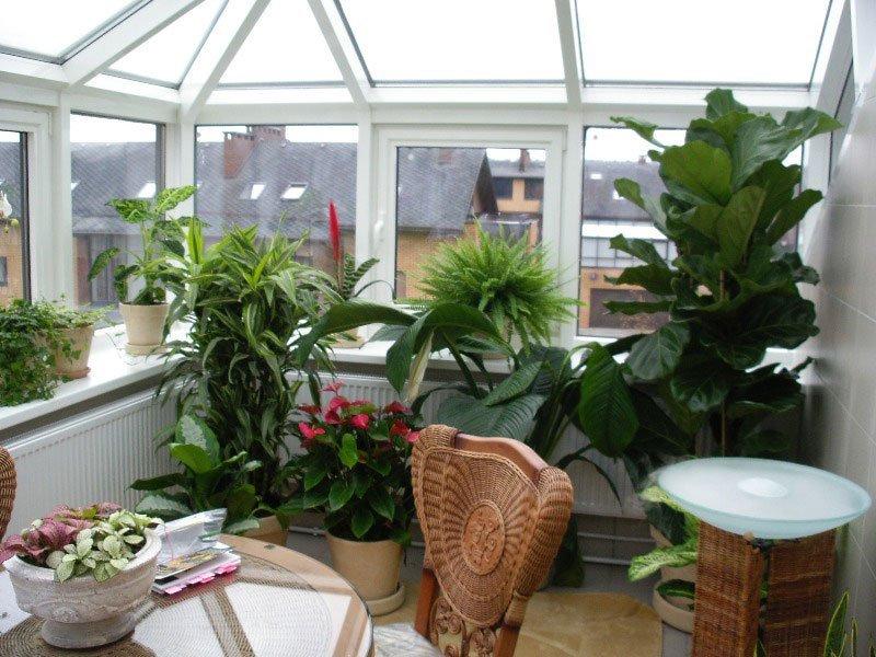 Зимний сад на балконе или лоджии: как устроить своими руками.