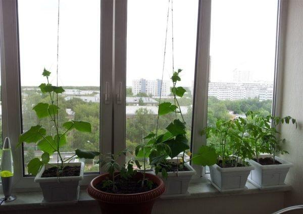 Балкон или лоджия должны быть застеклены и расположены на солнечной стороне дома.