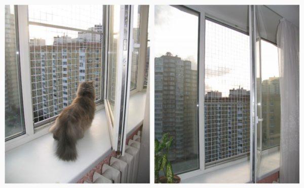 Как известно, кот может гулять «сам по себе».