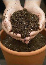 Почва должна быть структурированная и рыхлая.