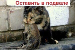 2koshka-sobravshayasya-poedat-krysu-i-riskuyuschaya-zarazitsya-ot-nee-600x475-300x200-kopiya-kopiya