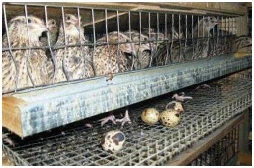 Ага, попались – птички в клетке.