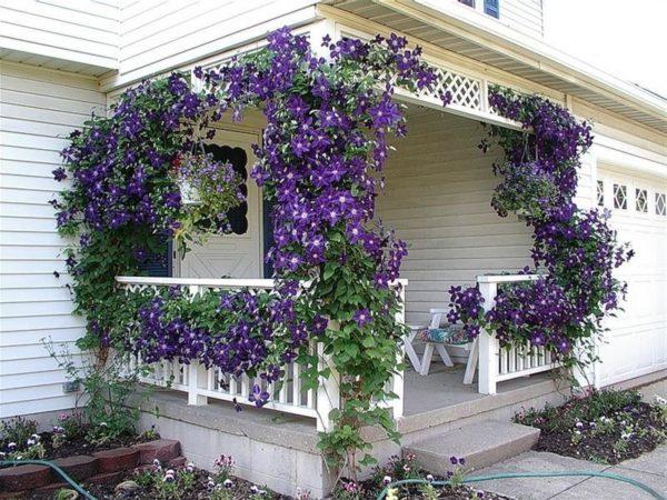 Для вертикального озеленения растению нужна опора