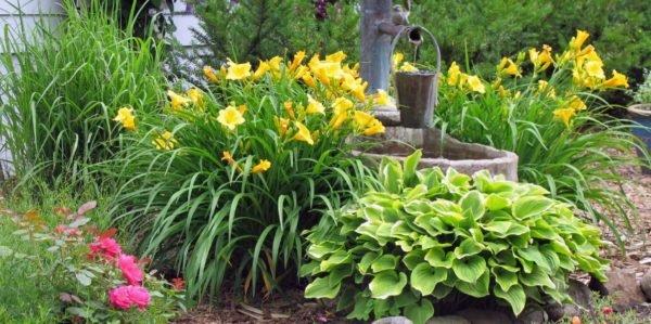 Долговременное пребывание на палящем солнце приведет растение к гибели