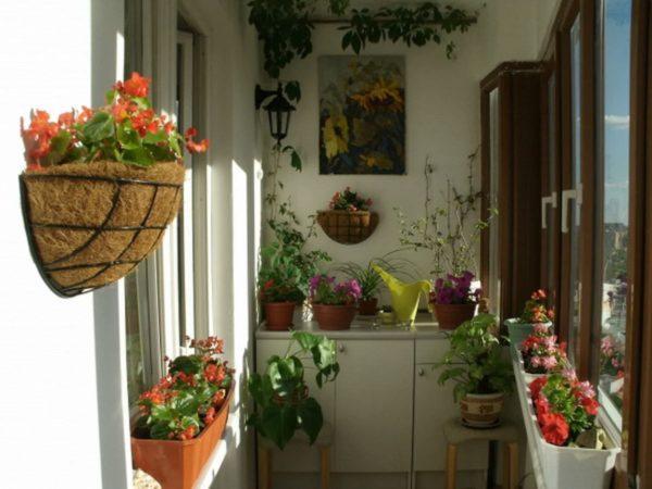 Если балкон маленький, растения нужно размещать компактно