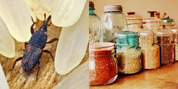 Хотите избавить пищевые продукты от жучков? Соблюдайте меры предосторожности