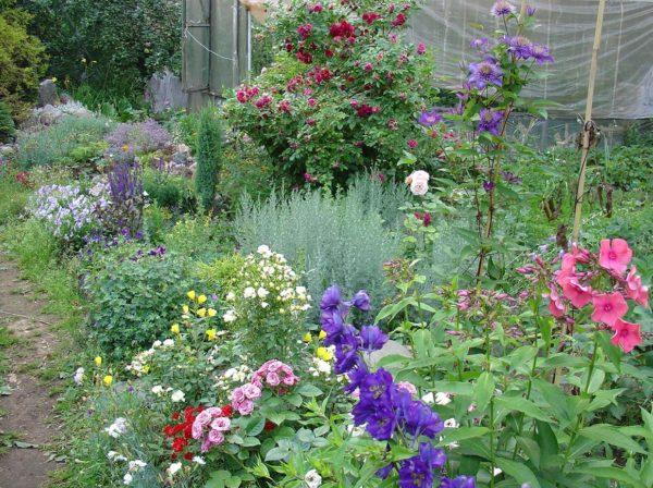 Ландшафтные дизайнеры высаживают клематис рядом с другими растениями, превращая участок в цветущий сад