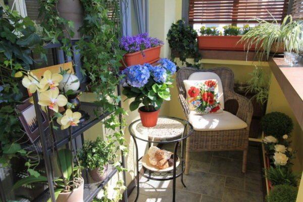 Можно использовать горшочные посадки с кактусами, лавром, агавой, алоэ, драценой, юккой, сеткреазией