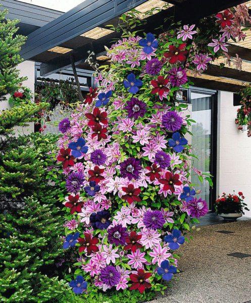 На фото посадка нескольких сортов одного срока цветения