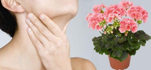 Народная медицина рассмотрела в герани способность ухаживать за кожей