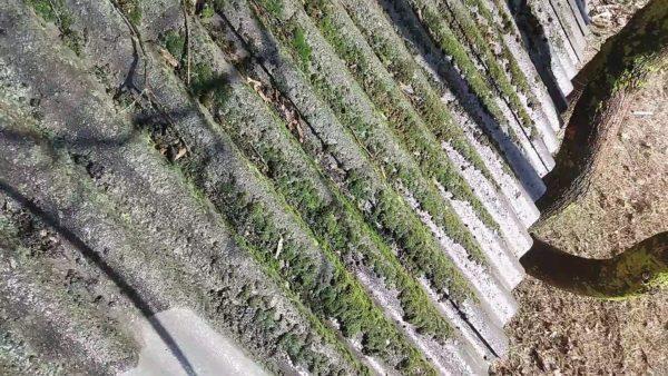 Нет ничего вреднее для шифера, чем грязь и мох, а потому, не откладываем очистку в долгий ящик