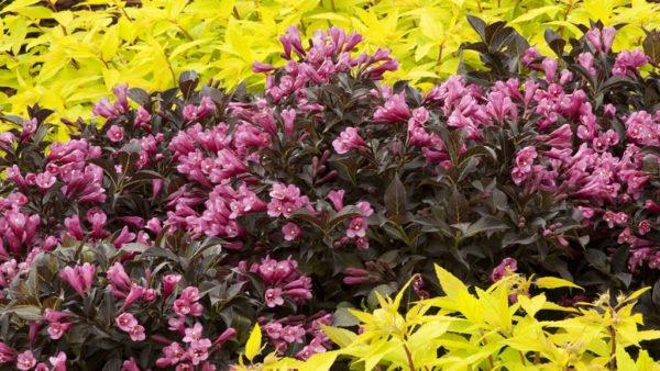 Обильное цветение — это результат своевременной подкормки