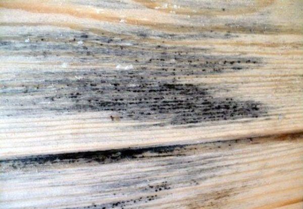 Перед применением состава грибок нужно удалить с древесины
