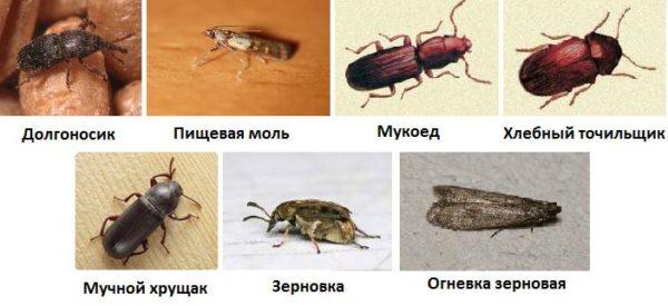 Практически виды жучков могут нанести вред организму человека