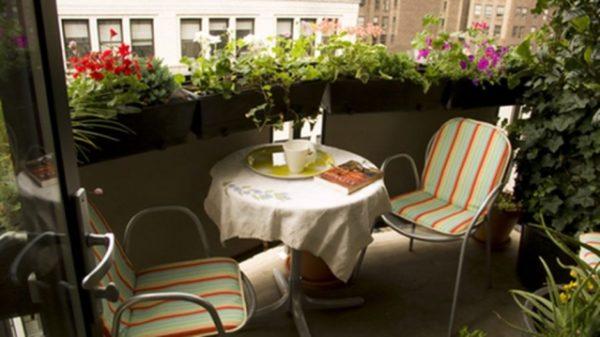 Правильное размещение цветов – залог уютного зеленого уголка