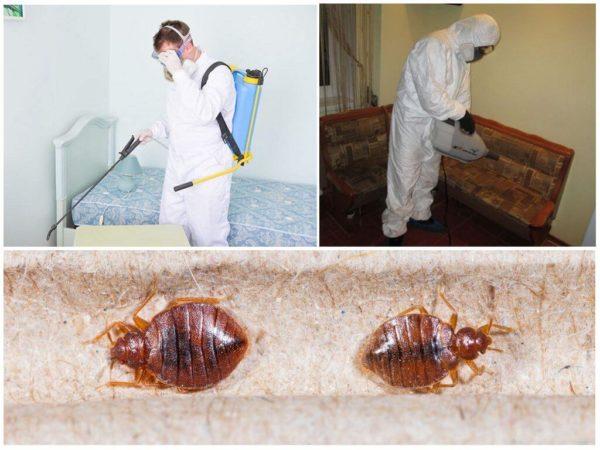Профилактика от насекомых включает в себя не только уборку, но и обработку специальными средствами
