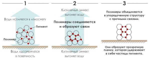 Процесс образования окрасочного покрытия.