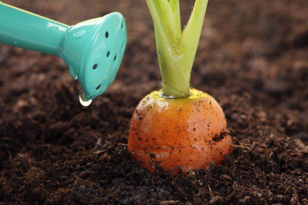 Растения необходимо регулярно поливать.